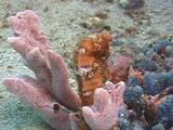 Orange Seahorse Close Up