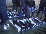 Dead Swordfish On Pallets. Men Standing And Expecting Them. At Vigo Fish Market, Spain.