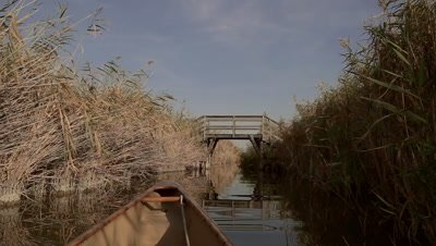 Canoeing through canal in the reed belt