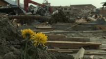 Japan Tsunami Aftermath - Rack Focus Flowers Stand Amidst Destruction In Rikuzentakata City