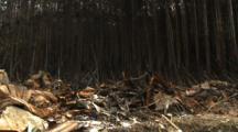 Japan Tsunami Aftermath - Burnt Out Debris And Trees In Shizugawa City