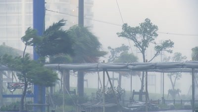 Palm Trees Thrash In Hurricane Winds