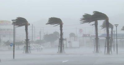 Hurricane Eyewall Wind Rain Lash Palm Trees