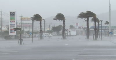 Hurricane Eyewall Wind Rain Lash Palm Trees