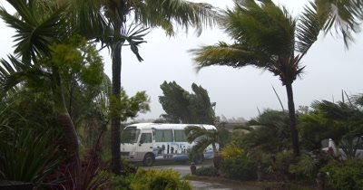 Hurricane Winds Thrash Palm Trees As Storm Hits