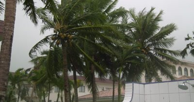 Palm Trees Thrash In Powerful Hurricane Wind