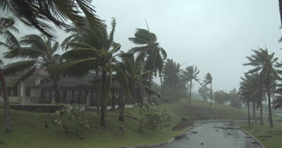 Palm Tress Struck By Strong Hurricane Winds