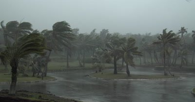 Strong Winds Lash Palm Trees As Hurricane Makes Landfall