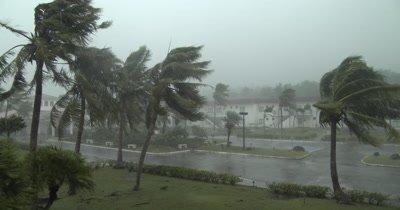 Hurricane Eyewall Wind Lashes Tropical Island Palm Trees