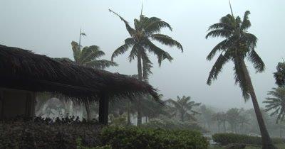 Eyewall Wind And Rain Lash Tropical Island Palm Trees As Hurricane Hits