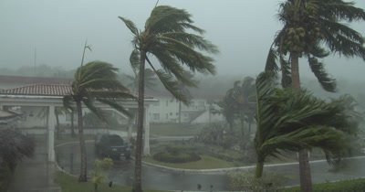 Hurricane Wind And Rain Hits Tropical Island Palm Trees