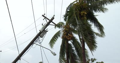 Utility Poles Knocked Down By Hurricane Wind