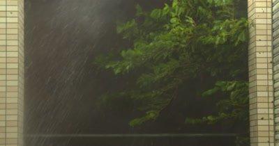 Tree Thrashes In Violent Hurricane Winds Rain