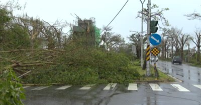 Downed Trees Block Road In Aftermath Of Major Hurricane Landfall