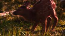 Elk Calf Runs And Prances In Trees