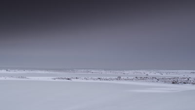 Extreme wide pan across a frozen pond with the open ocean in the background to reveal two male polar bears grappling and sparring and leaping at each other.