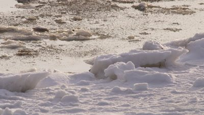 Polar bear walks into frame along edge of ice, pack ice in the process of freezing lies just off the edge.  Following shot.  Ext. Tight.