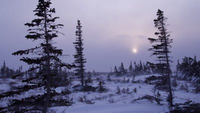 Scenic - Wide storm scenic of wind whipping snow across the ground in boreal forest.  The sun can be seen dimly shinning through heavy clouds.  With trees in the foreground.