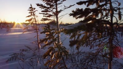 Scenic - Slow pan across sunrising over a boreal landscape.  Sun visible breaking the horizon in the background with icy and snow trees in focus in the foreground.  Wide.