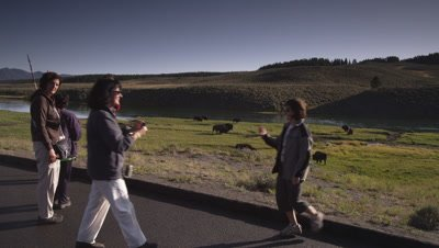 Group of tourists watch bison herd grazing along the Yellowstone River.  Wide shot.