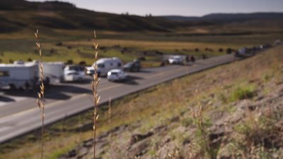 Tourists parked on side of road watch bison along the Yellowstone River.  Tourists and bison out of focus…stalks of grass in focus in foreground.  Wide shot.