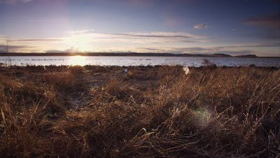Sunset scenic.  Dolly track across golden grass in front of a pond as the sun sets over the Rocky Mountains on the horizon.  Track stops to feature a lone snow goose feather in the grass.  Wide.