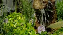Old Gray Truck Converted To Water Garden, Fountain, Water Hyacinth