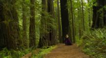 Nordic Woman In Renaissance Costume Enters Redwood Forest And Sits Down