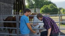 Two Young Men Talk, Pet Horses Near Livestock Corral