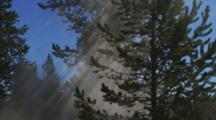 Steam Vent Creating Mist, Sun Rays In Pines, Dew On Trees, Blue Sky