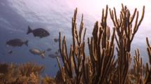 Fish Swimming Among Soft Coral