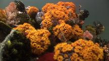 Beautiful Colorful Soft Coral , Scenic.