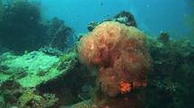 Anemone On Shipwreck