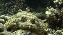 Crocodile Fish Head On Portrait
