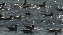A Group Of Seagulls Sit In The Water As The Water Sparkles In The Sun.