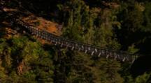 Rope Bridge Through Forest