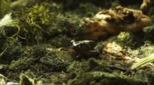 Tree Frog Near Log, Hops Away
