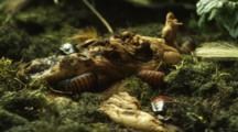 Cockroaches On A Log