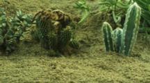 Tarantula Moves Around Desert Vegetation, Crawls On Cactus