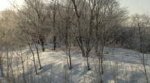 Winter Scene, Leafless Tree Cast Shadows On Snow