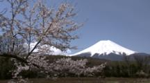 Cherry Blossoms And Mt. Fuji In Japan