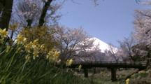 Daffodils And Mt. Fuji In Japan