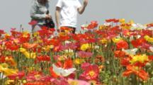 People Walk In Field Of Iceland Poppies