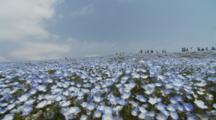 People Walk Through Field Of Baby Blue Eyes