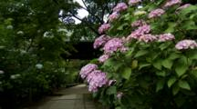 Hydrangeas Near Park Structure And Path