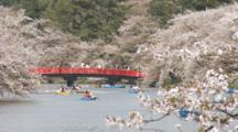 People Enjoying Rowing Boats At Hirosaki Castle Surrounded By Blossoming Cherry Trees