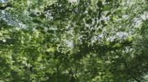 Sun Through Forest Canopy