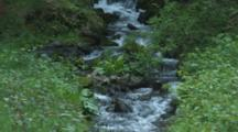 Stream, Creek Flowing Over Rocks In Lush Forest
