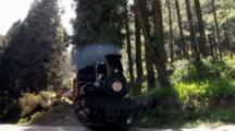 Locomotive Moving Through Forest In Alishan National Scenic Area, Taiwan