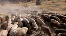 Man Riding On Horse Herds Sheep